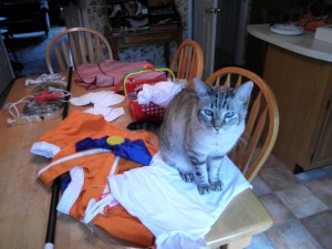 A brownish cat sits on a table with a Sailor Venus costume laying on it.
